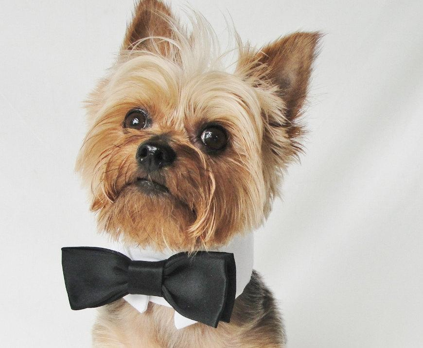 Wedding - Dog Tuxedo, dog wedding attire, white black bow tie, tuxedo collar, dog Wedding, Dog Collar, Pet Wedding Attire, dog clothes large and small