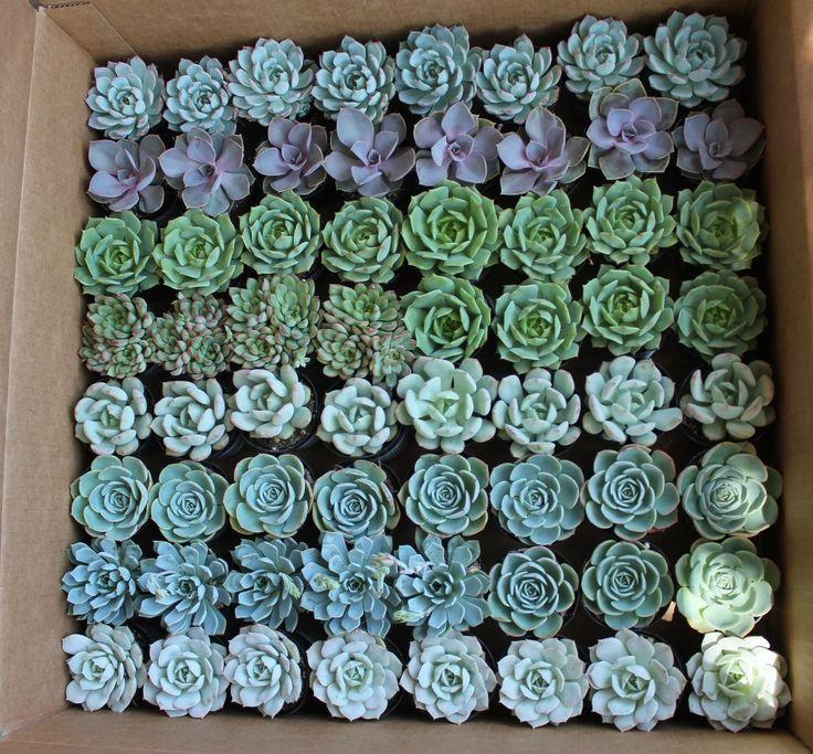 Wedding - Rainbow Flowers