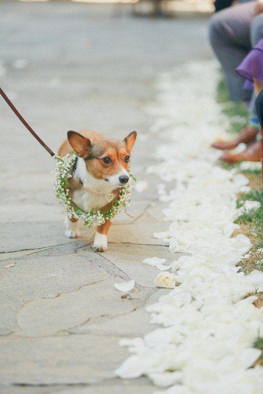 Düğün - Wedding Pets