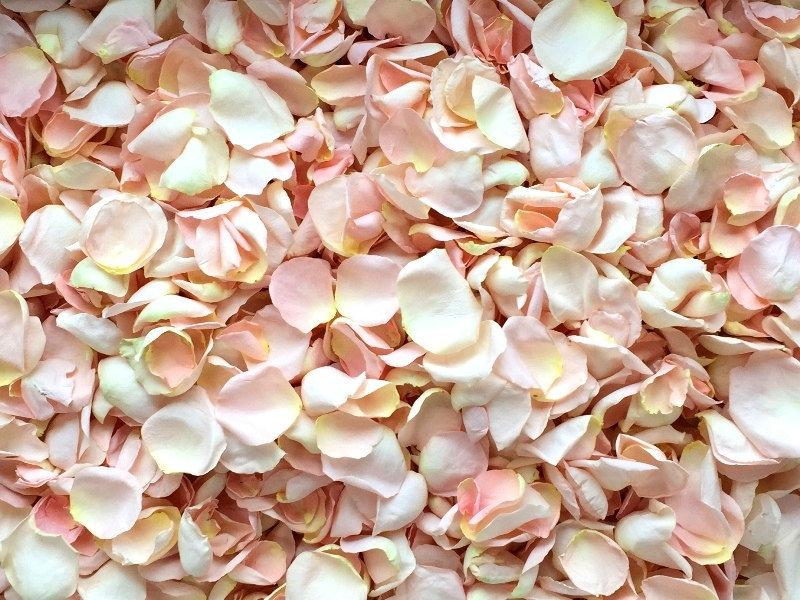 Mariage - Freeze Dried Rose Petals, Blush, 5 cups of REAL rose petals, perfectly preserved