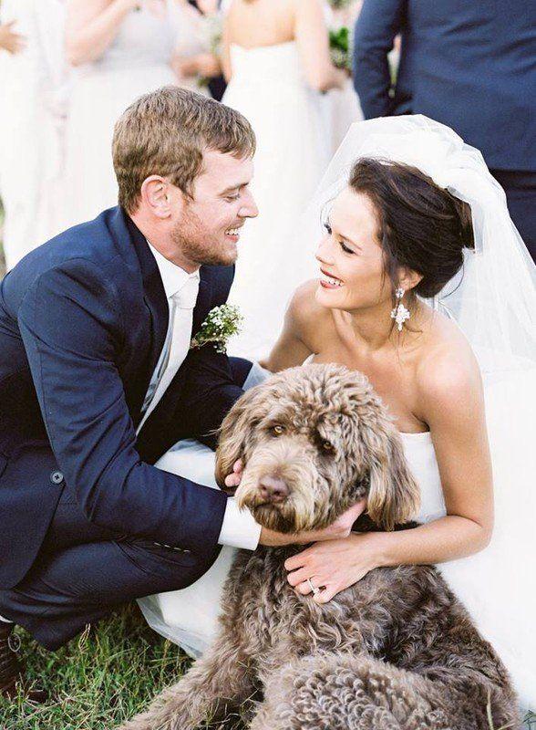 Hochzeit - Wedding Pets