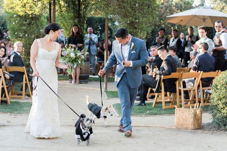 Wedding - Wedding Pets