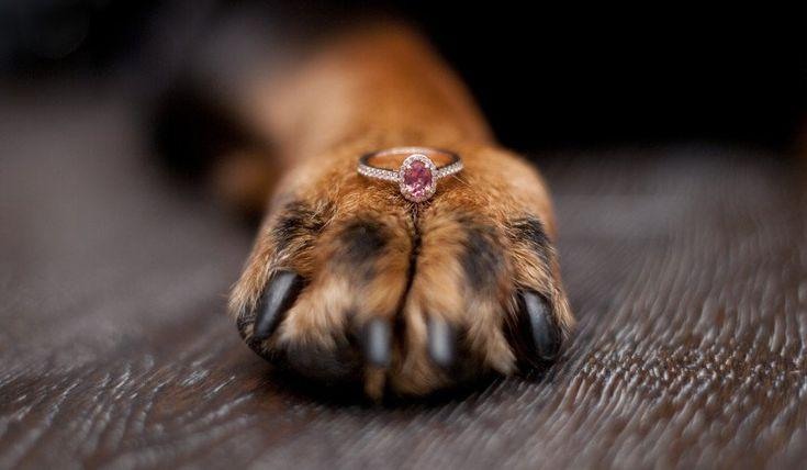 Hochzeit - How To Propose With A Puppy (or Another Pet)