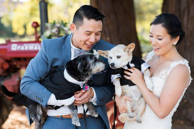 زفاف - Wedding Pets