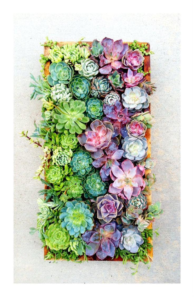زفاف - Succulents In Vertical Panel
