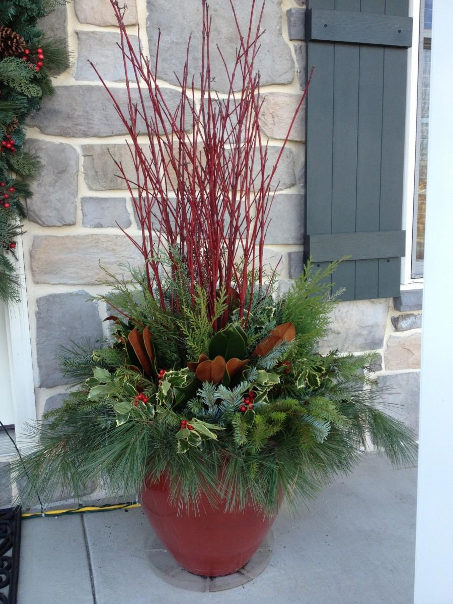 "زفاف - Red Twig Dogwood Twigs / Stems / Branches.  Beautiful Christmas decor and vase filler!  ( 20""36"" stems )"