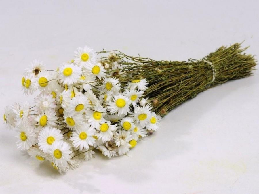 "Свадьба - Chamomile Bunch - Dried Chamomile Bundle - over 14"" long, 20-35 Stems, certified organic, dried Chamomile bouquets, crafts, and weddings"