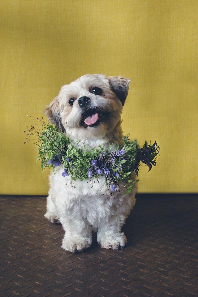 Wedding - Dogs In Flower Crowns
