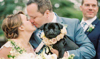 Wedding - Cute Wedding Pet Idea - Dog With Flower Collar {Shine Events}