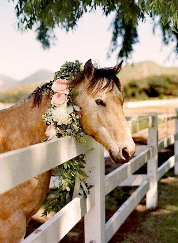 Hochzeit - Pretty