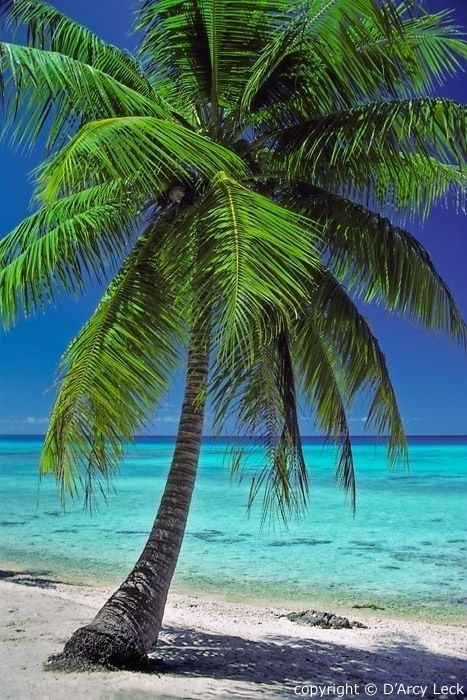 Hochzeit - Palm Trees In Front Of The Ocean