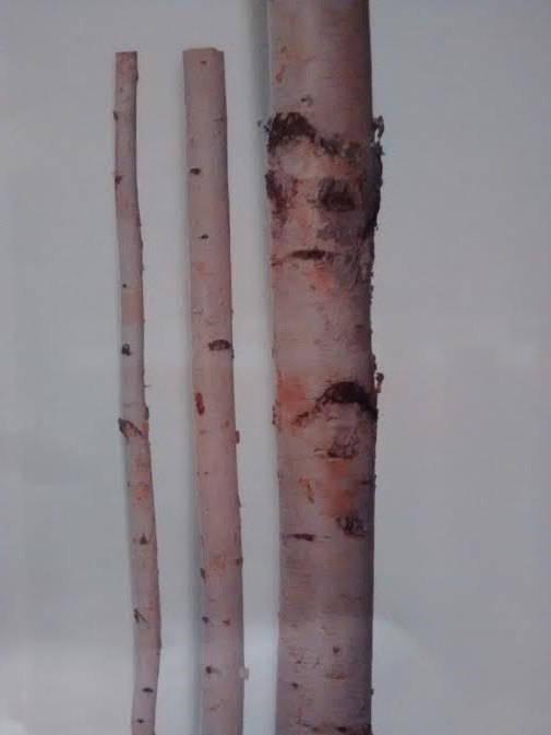 Свадьба - Tall Birch Poles (6'-8' Long) -Birch Logs/Birch Poles/Bulk Birch Poles/Birch Wedding Arch/Birch Tree/Wholesale Birch Poles/Birch logs
