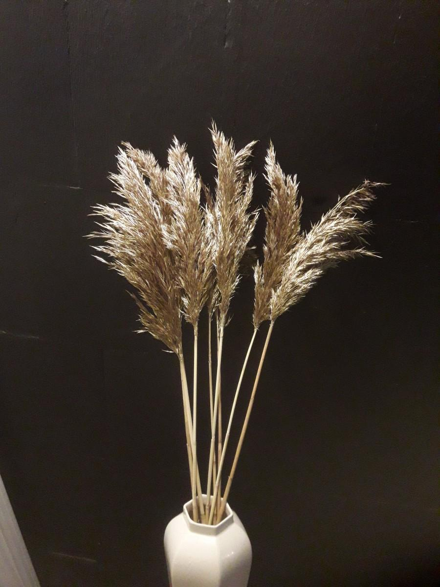 """Hochzeit - 23"""" Gold Feather Reed Grass, Decorative Plumes, Natural Dried Plumes, Pampas Grass, Pampas Grass Decor, Fall Decorations Indoor, Grass, Reed"""