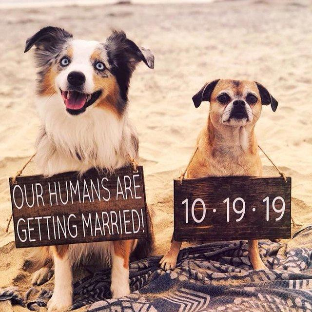 Mariage - Our Humans are Getting Married, Pet Save the Date Sign, Dog Photo Prop Sign, Pet Wedding Sign, Engagement Photos Sign, Rustic Wedding Signs