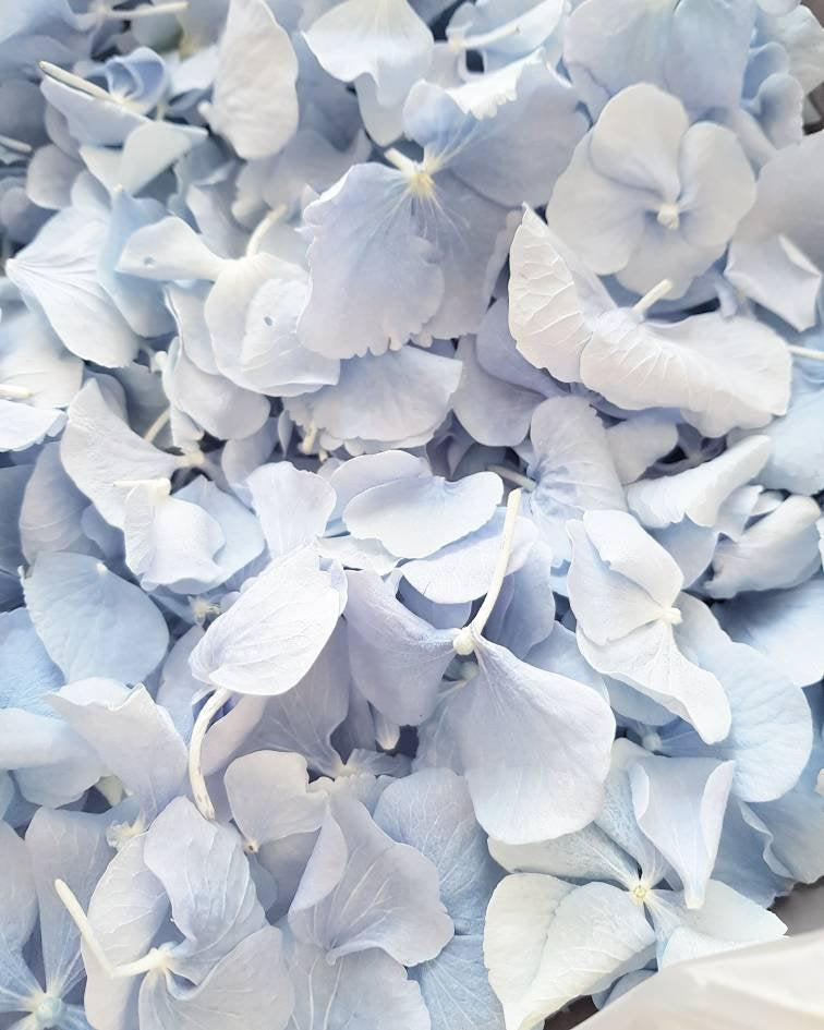 Wedding - Freeze Hydrangea Petal, Natural Dusty Blue REAL Flower petal