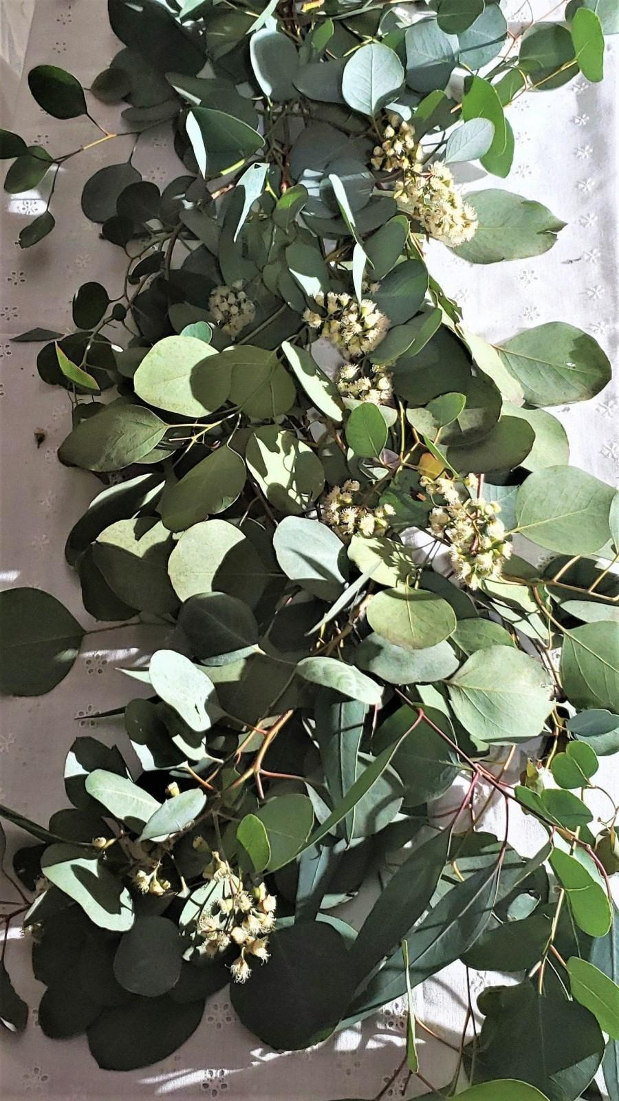 Wedding - Silver Dollar Eucalyptus Stems in Bundles of 10, Wedding Flowers, Wedding and Event Greenery,Fresh Eucalyptus,DIY Wedding Decor, Floral Stem