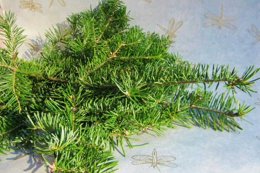 Wedding - Fresh Cut Balsam Fir Branches