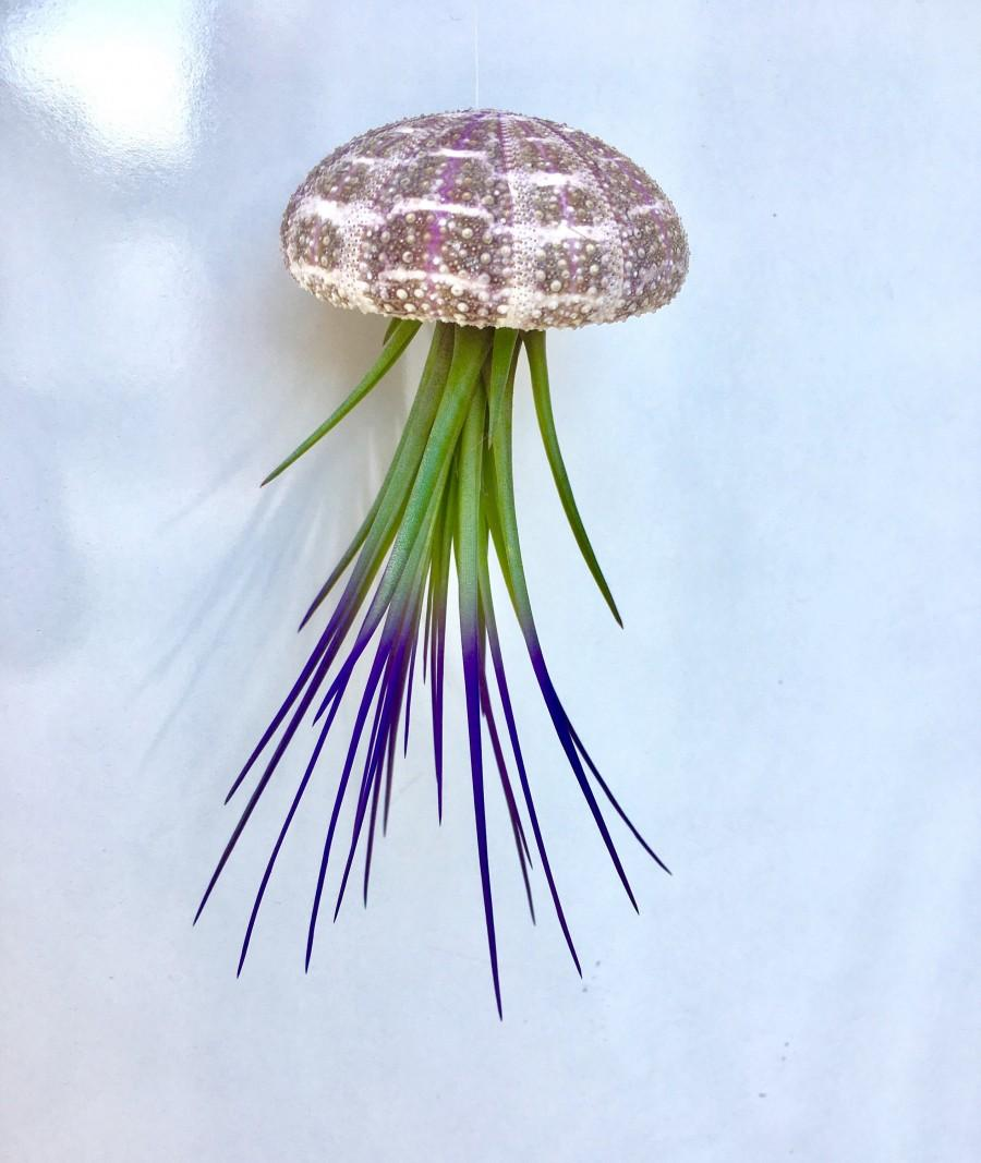Wedding - Jellyfish Air Plant Hanger single with purple tricolor and Alphonso Sea urchin; beach wedding shell hanging airplant succulent wholesale