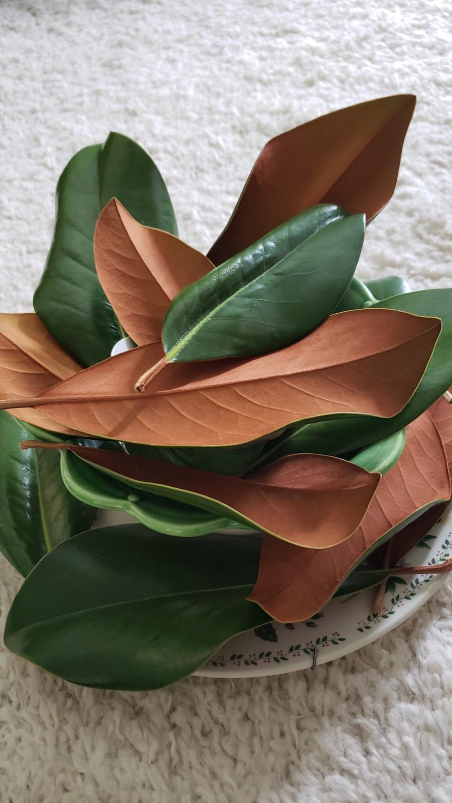Mariage - Fresh OR Dried Southern Magnolia Leaves - picked DAY OF shipping for freshness!