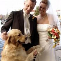 wedding photo - Pets In Wedding
