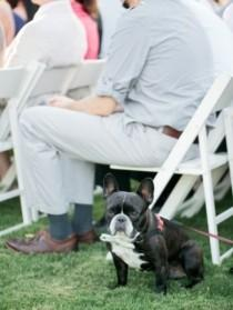 wedding photo - Precious Puppies