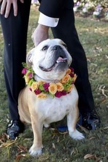 wedding photo - الكلب في الزفاف (متابعة لينك للمادة)