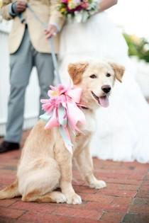 wedding photo - ميليسا ويلسون التصوير