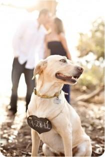 """wedding photo - """"آه نعم! بلدي الإنسان يتم الزواج."""" لطيف حفظ التاريخ صور مع الكلب الخاص بك."""