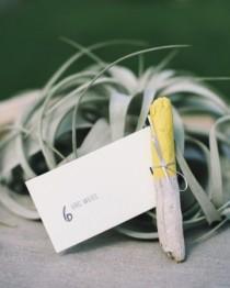 wedding photo - Les cartes Escort