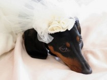 wedding photo - Marry Me?