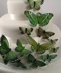 wedding photo - جميلة كعكة الفراشة مجموعات