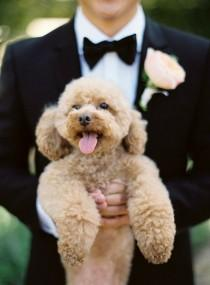 wedding photo - Weddings-Flower Girls,Ring Bearer
