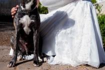 wedding photo - Hot Dog