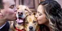 wedding photo - Why Engagement Shoots Have Gone To The Dogs