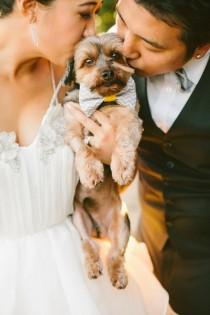wedding photo - (Dogs At Weddings)