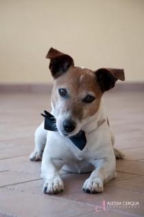 wedding photo - (Dogs At Weddings)