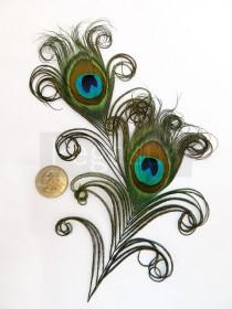 wedding photo - NATURAL Curled Peacock Feather Eyes.  DIY feathers for wedding invitations, bouquets, center pieces and millinery (Small)(6 Feathers)