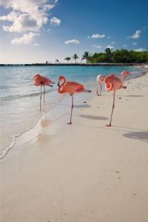 wedding photo - Caribbean Beach With Pink Flamingos By George Oze