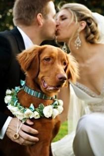 wedding photo - Ringträger Für Ihre Hochzeit Gesucht? Unser Tipp: Hunde Sind Die Besten Für Den Job!