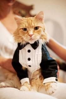 wedding photo - 12 Best Dressed Pets At Weddings