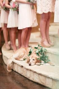 wedding photo - 16 Super Cute Dog Wedding Photos