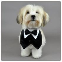 wedding photo - Black Outfit For Pet