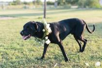 wedding photo - Adorable Flower Crown For Dog