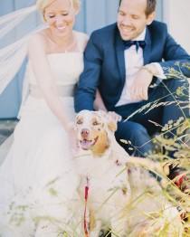"wedding photo - Anna Roström On Instagram: ""Choose A Best Dog (men) For Your Wedding     // Jag Har Svårt Med Gubbar, Alltså Inte Gubbar I Form Av…"""