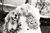 "wedding photo - 21 Adorable Wedding Pets To Make You Say ""Awwww!"""
