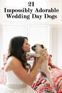 wedding photo - 21 Impossibly Adorable Wedding Day Dogs