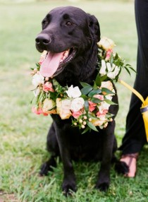 wedding photo - Cute Wreath for Dog