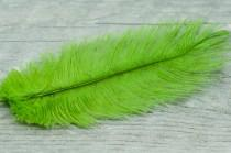 "wedding photo - Large Ostrich Feather, Neon Green Natural Feather, 10"" Feather, Boho, Findings, 3pics Dyed Feathers, Wedding Accessories, Bohemian Findings"