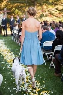 wedding photo - The Definitive Guide To Including Your Pup On Your Special Day