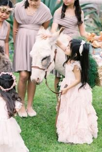 wedding photo - This Intimate Wedding Had One Very Special Guest: A Donkey!